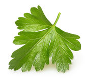 Parsley herb isolated Stock Photos