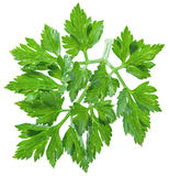 Parsley herb isolated on a white background. Royalty Free Stock Photography