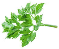 Parsley herb isolated on a white background. Stock Images