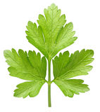 Parsley herb isolated Royalty Free Stock Images
