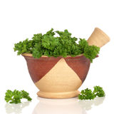 Parsley Herb Leaves Royalty Free Stock Photography