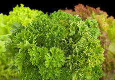 Parsley herb with salad Royalty Free Stock Images