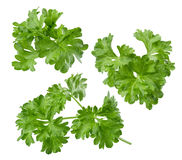 Parsley herb set path included isolated on white background Stock Photo