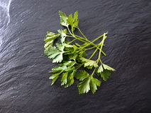 Parsley slate Royalty Free Stock Images