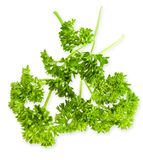 Parsley isolated. Close-up parsley isolated on a white background royalty free stock image