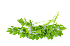 Parsley isolated. Twigs of green parsley isolated on white close up stock photo