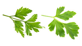 Parsley is isolated Stock Image