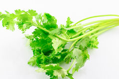 Parsley isolated Royalty Free Stock Photos