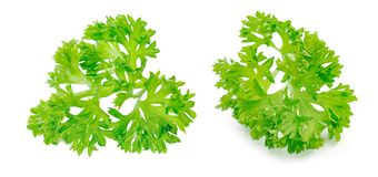 Parsley isolated on a white background Royalty Free Stock Image