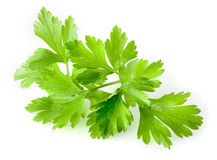 Parsley isolated on white Stock Photos