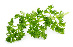 Parsley Royalty Free Stock Image