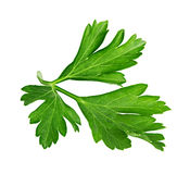 Parsley isolated on a white. Background Stock Photo