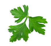 Parsley isolated on a white. Background Stock Photos
