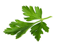 Parsley isolated on a white Stock Image