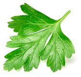 Parsley isolated on white royalty free stock images
