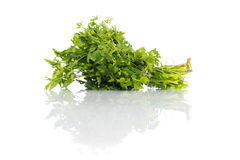 Parsley isolated on white Royalty Free Stock Photography
