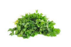 Parsley isolated on white background. Green leaves of parsley isolated on white background stock photos