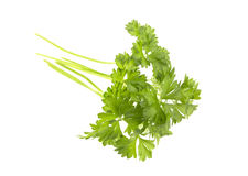 Parsley isolated on white Royalty Free Stock Photos