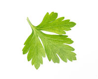 Parsley isolated on white Stock Images