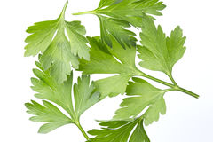 Parsley isolated on white, top view Stock Photos