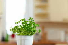 Parsley in kitchen Stock Photo
