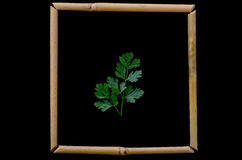 Parsley. Leaf bamboo framed shot on black background Stock Photography