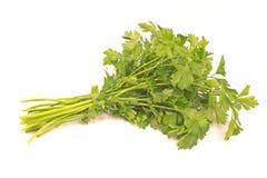 Parsley leaf Stock Photos