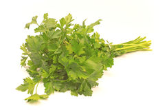 Parsley leaf Royalty Free Stock Photography
