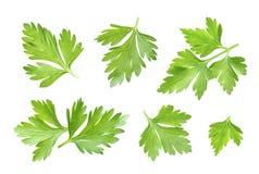 Parsley leaf isolated on white. Closeup Stock Photo