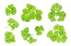 Parsley leaf isolated on white. Closeup Stock Photos