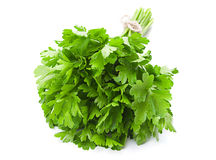 Parsley leaf on white Royalty Free Stock Image