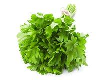 Parsley leaf on white Royalty Free Stock Image