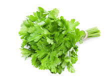 Parsley leaf on white Royalty Free Stock Images