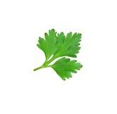 Parsley leaf on white background Stock Image