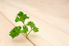 Parsley leaf Royalty Free Stock Images