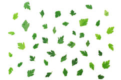 Parsley Leafs Stock Photos