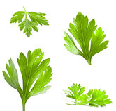Parsley leaves Royalty Free Stock Photography