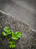 Parsley leaves on a dark polished stone with an irregular fracture. Against the background of ebony Royalty Free Stock Photo