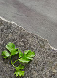 Parsley leaves on a dark polished stone with an irregular fracture. Against the background of ebony Stock Images