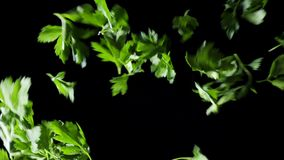 Parsley leaves fall down on a black background. Frame. Parsley wobbles in the frame. Parsley leaves fall to the surface. Slowly stock video