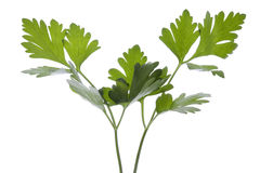 Parsley Leaves Isolated Stock Photos