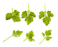 Parsley leaves isolated Stock Images
