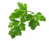 Parsley leaves isolated on white background Stock Image