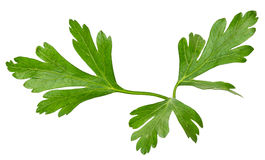 Parsley leaves isolated on white background Royalty Free Stock Photography