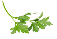 Parsley leaves isolated on white background Stock Photography