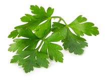Parsley leaves isolated on white background Royalty Free Stock Images