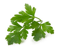 Parsley leaves isolated on white background Stock Images