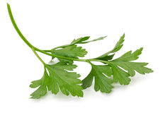 Parsley leaves isolated on white background Royalty Free Stock Photos
