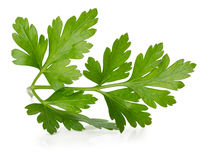 Parsley leaves isolated on white background Stock Image