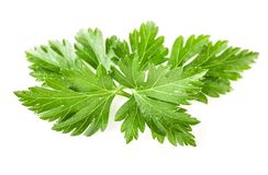 Parsley leaves isolated on white, closeup. Parsley leaves isolated on white background, closeup royalty free stock images